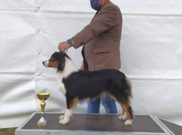 New Champion in our Kennel