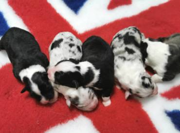 The E litter is here!